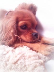 Mein Hund Luna (c) Johanna Ringe