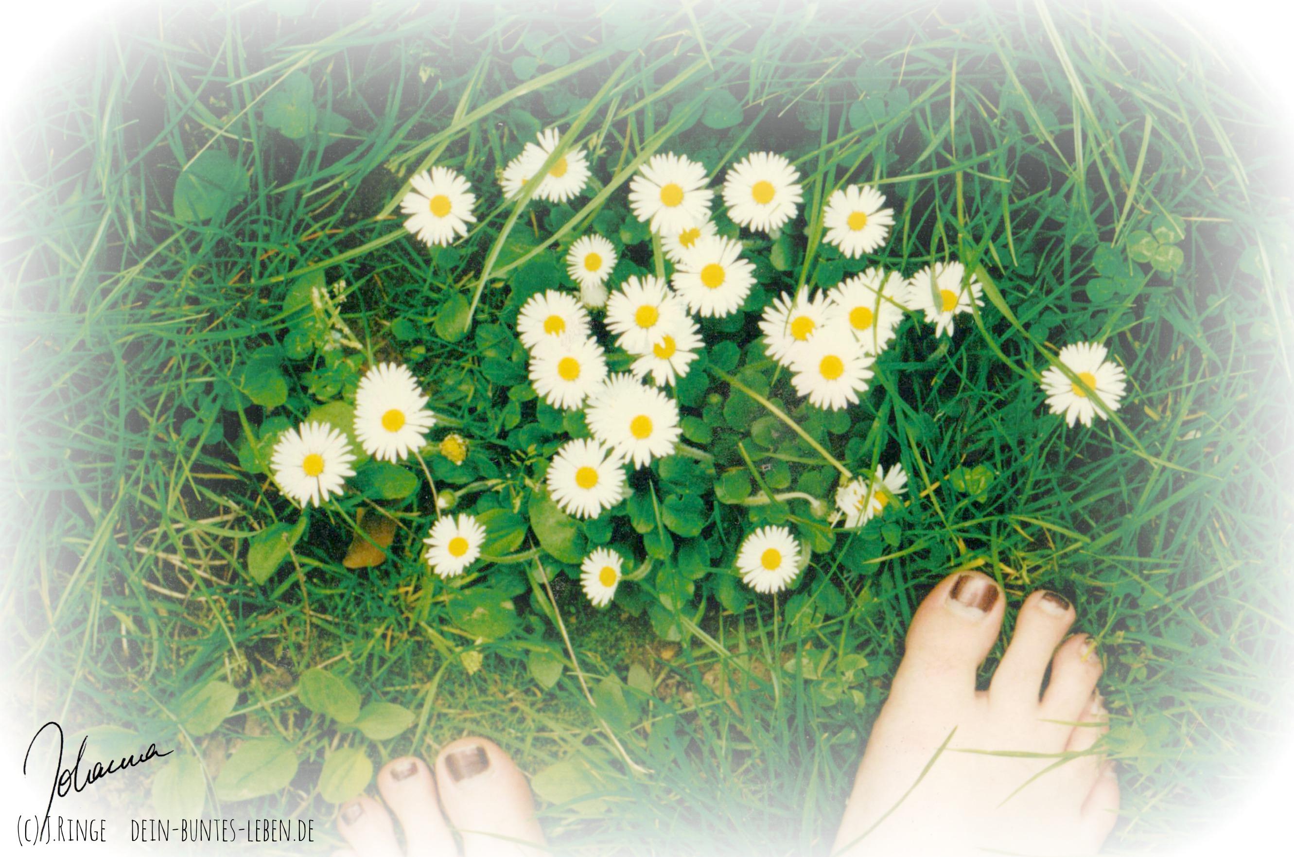 Gras Wachstum (c) Johanna Ringe