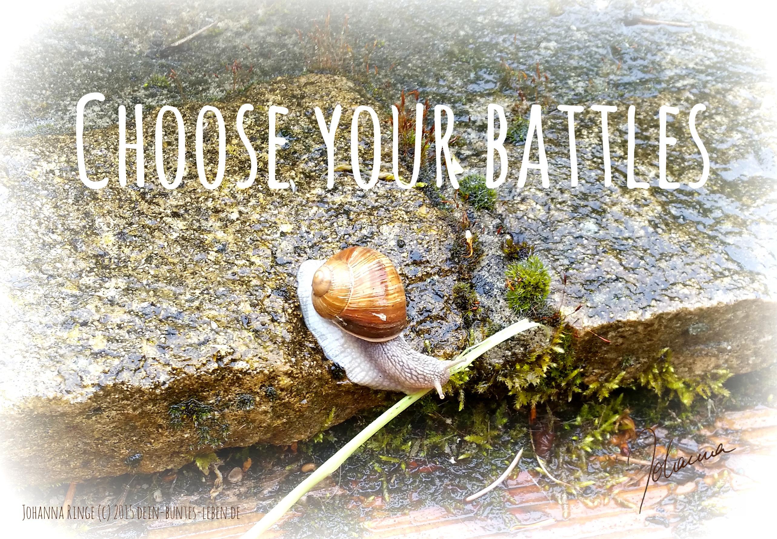 Text Choose your battles auf einem Foto von einer Schnecke, die ein Hindernis überwindet. (c)2015 Johanna Ringe. www.dein-buntes-leben.de