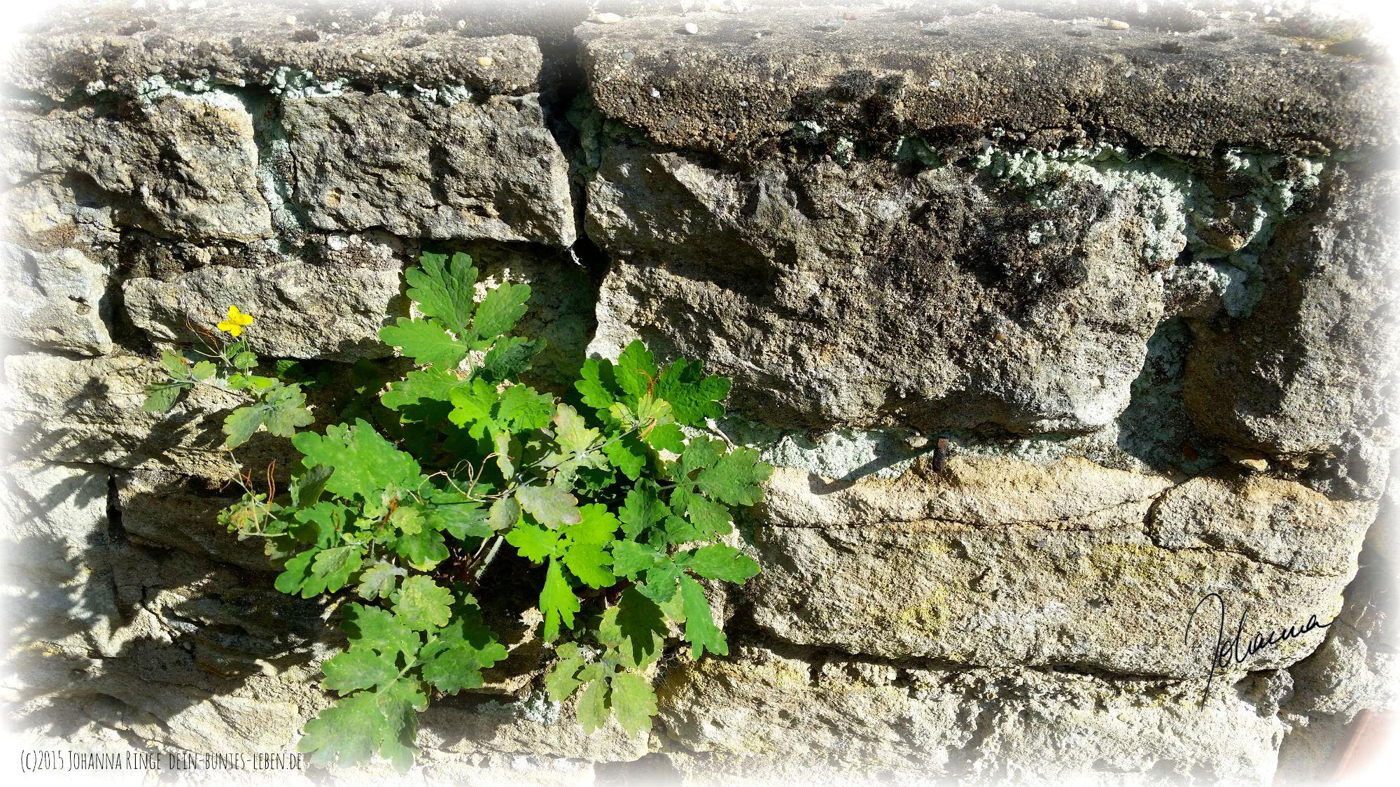 Entscheidest du dich für oder gegen Stress? Siehst du Mauer oder Pflanze?(c)2015 Johanna Ringe dein-buntes-leben.de