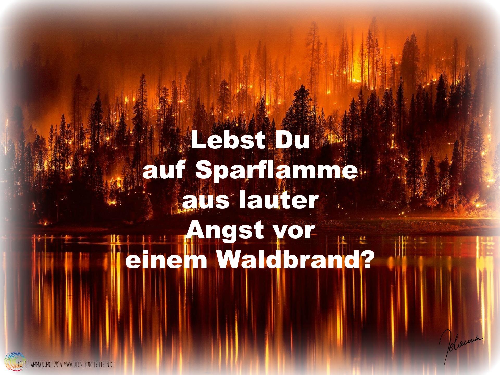 Lebst Du auf Sparflamme aus Angst vor einem Waldbrand? (c) Johanna Ringe 2016 www.dein-buntes-leben.de