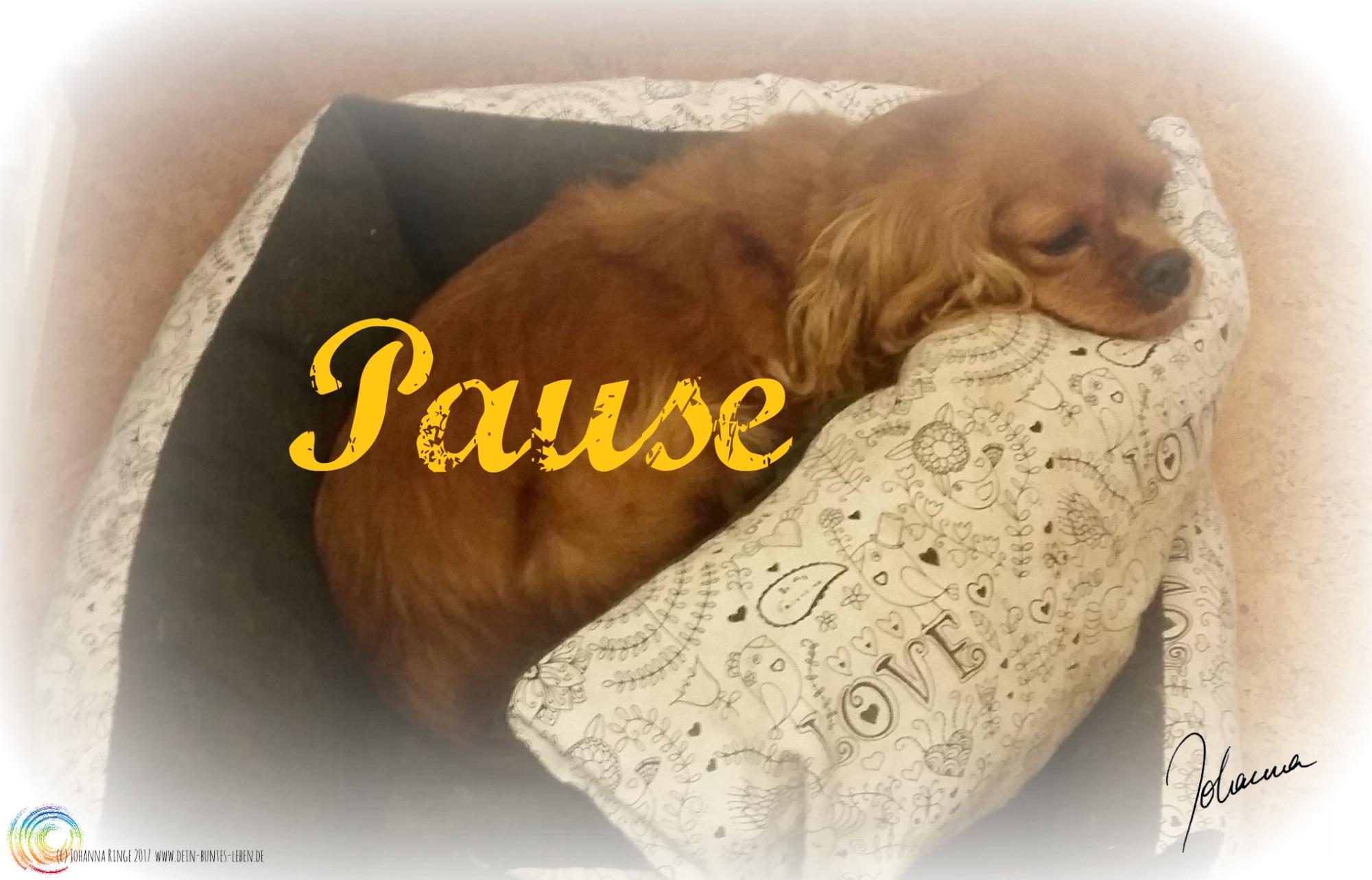"""Bild vom Hund im Bettchen mit dem Wort """"Pause"""" darüber. (c) Johanna Ringe 2017 www.dein-bunte-leben.de"""