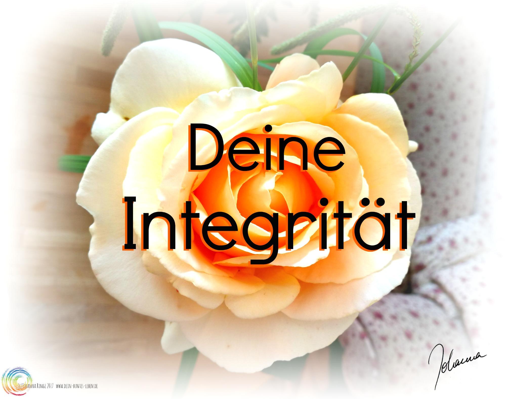 Foto einer zarten Rosenblüte mit Text: Deine Integrität . (c) Johanna Ringe 2017 www.dein-buntes-leben.de