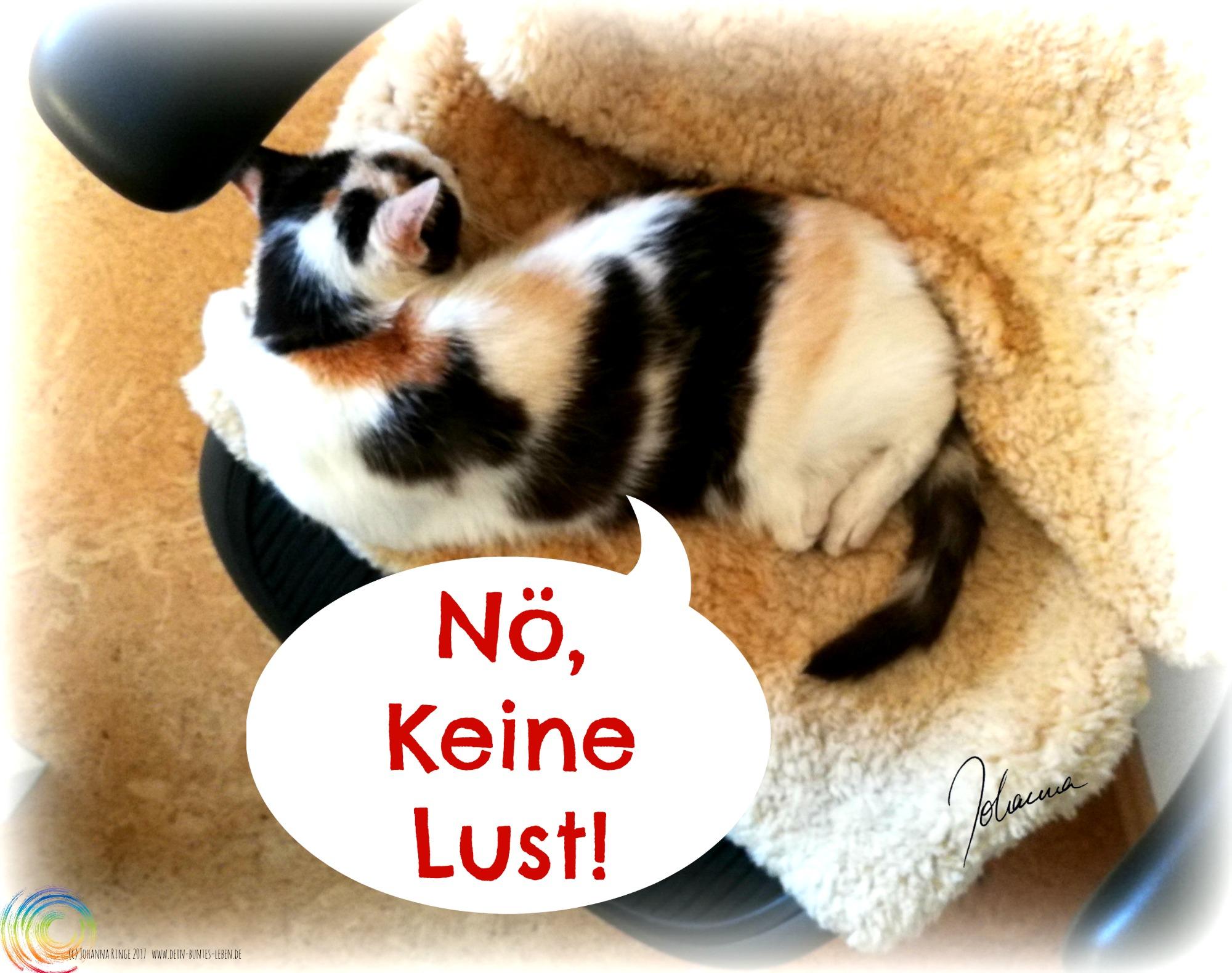"""Schlafende Katze im Bürostuhl mit Sprechblase: """"Nö, keine Lust!"""" Alltag (c)2017 Johanna Ringe www.dein-buntes-leben.de"""