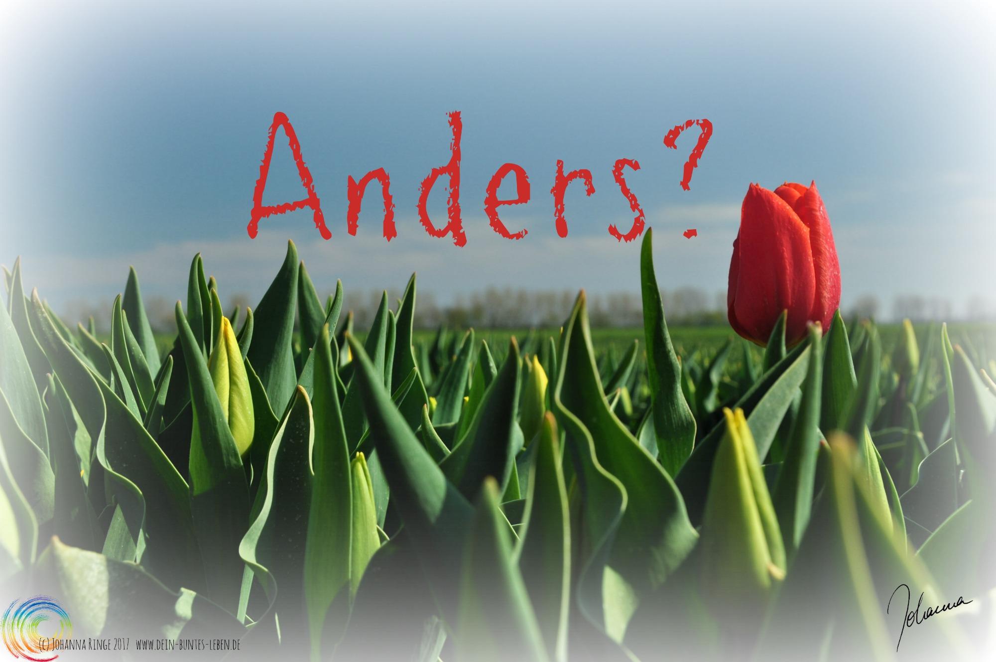 Foto von grünem Feld mit einzelner roter Tulpe, darüber Schriftzug: Anders? (c)2017 Johanna Ringe www.dein-buntes-leben.de