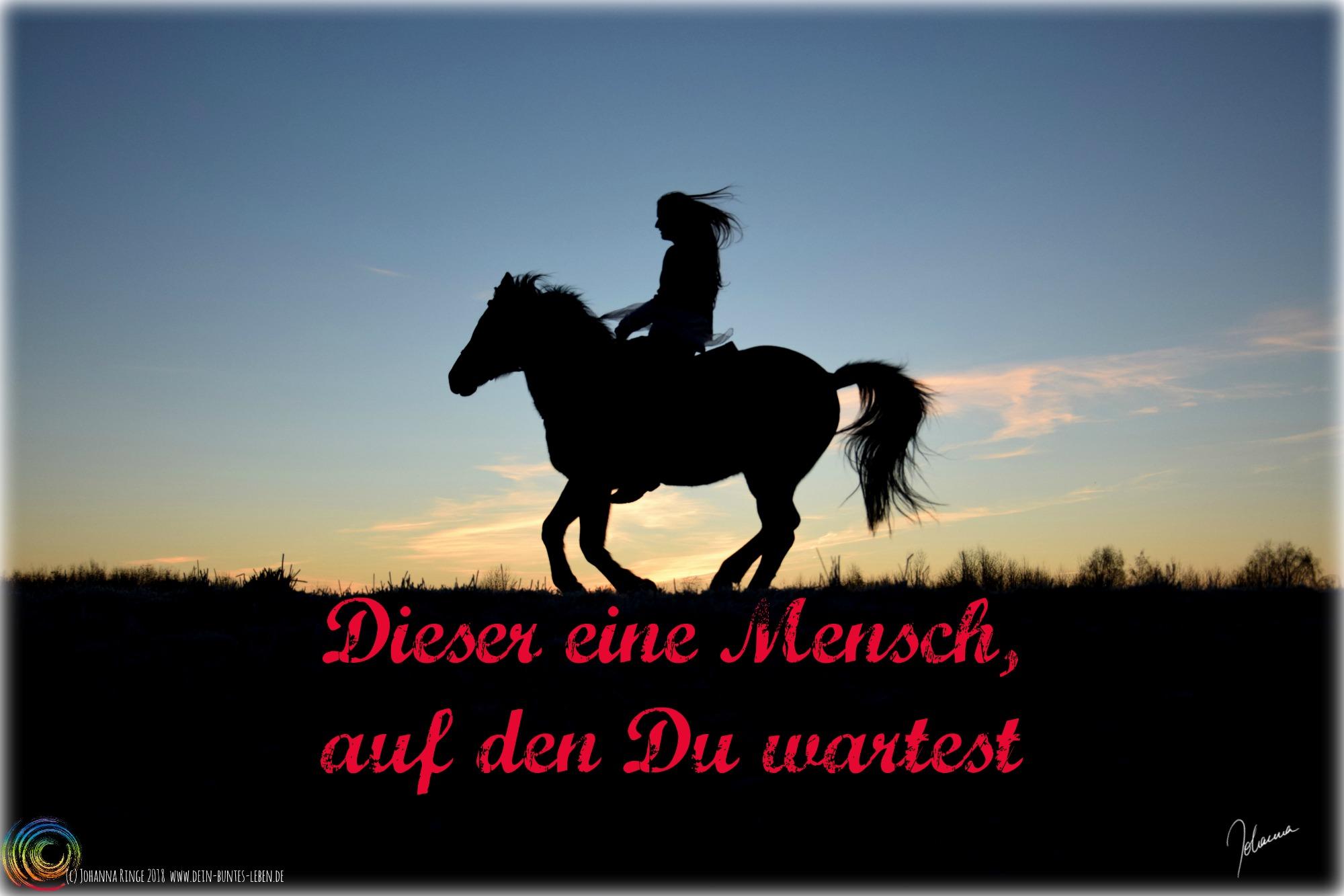 Dieser eine Mensch auf den Du wartest... Text vor Foto einer Reitersilhouette im Abendlicht. (c) Johanna Ringe www.dein-buntes-leben.de