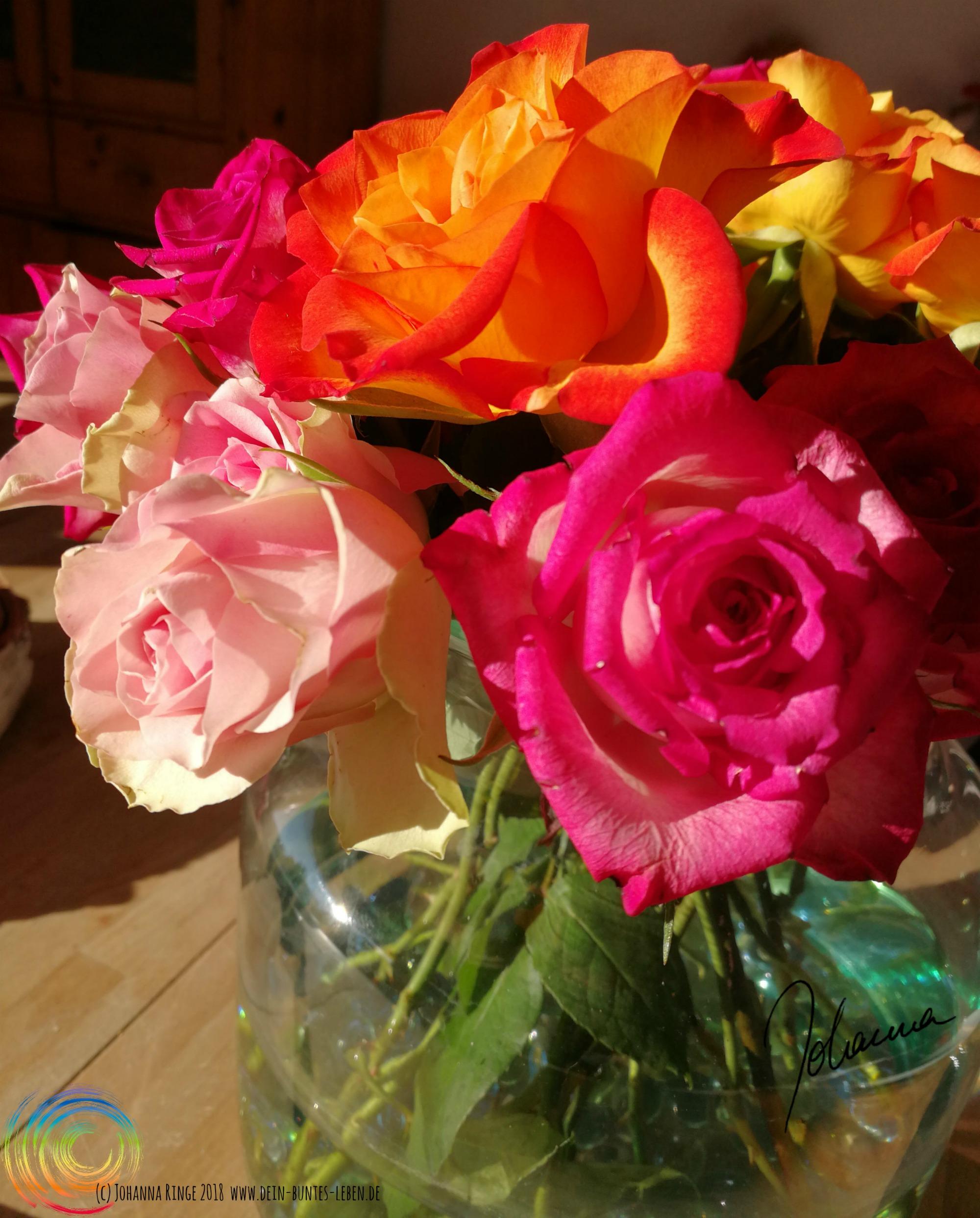 Foto eines Straußes aufgeblühter, voller, bunter Rosen, gebadet in Sonnenstrahlen. (c) Johanna Ringe 2018 www.dein-buntes-leben.de