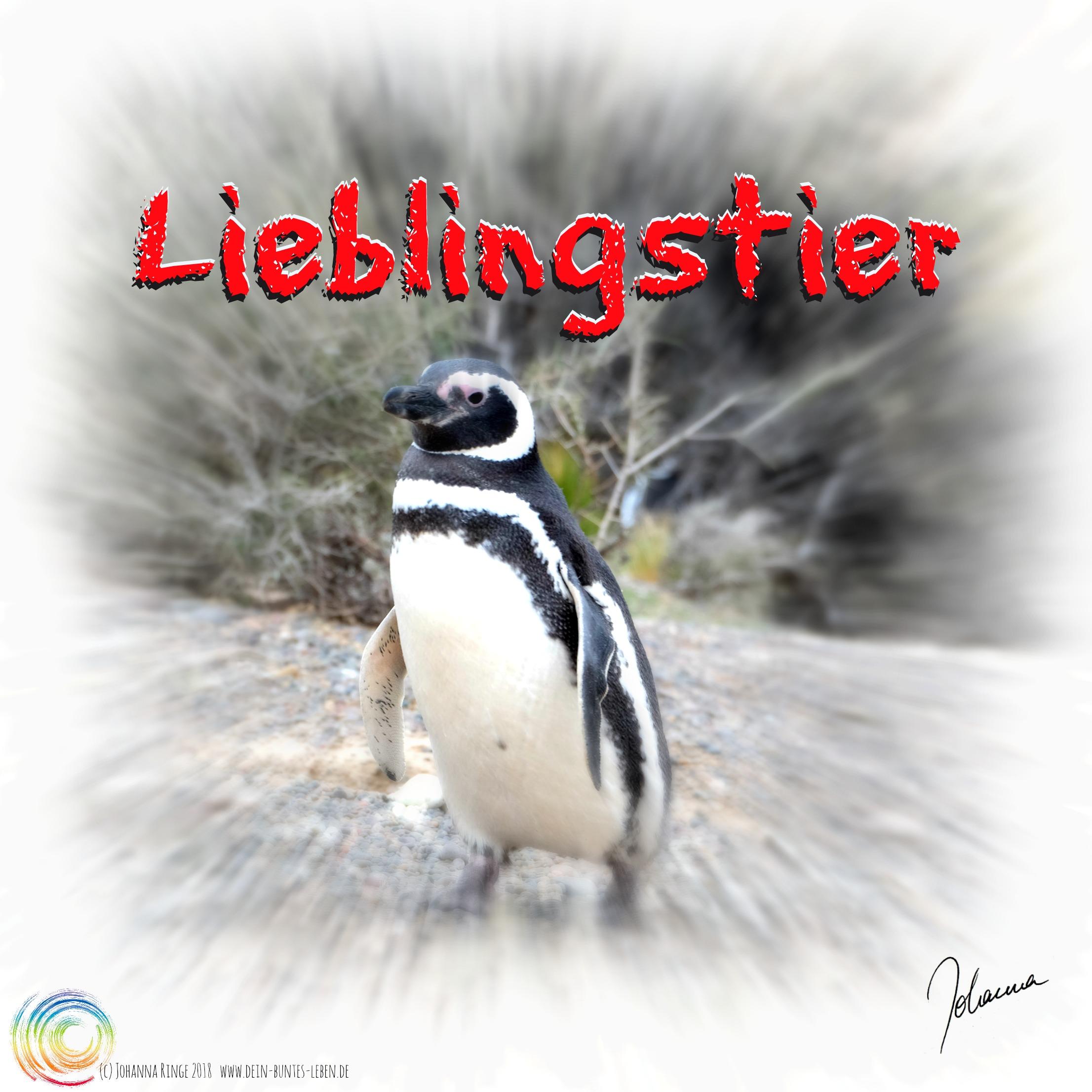 Text Lieblingstier auf einem Photo eines Pinguins (c)Johanna Ringe 2018 www.dein-buntes-leben.de