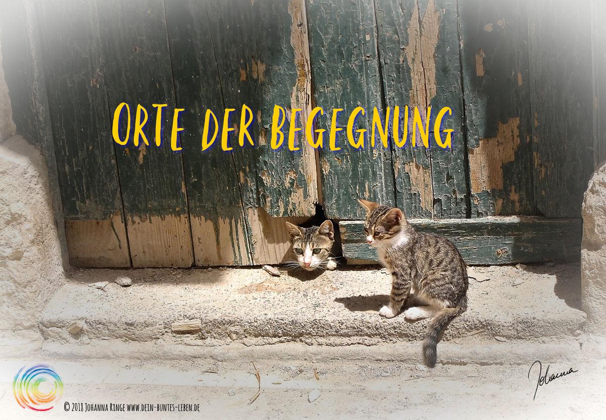 Begegnung, wo?Text :Orte der Begegnung über Photo von Holztor mit Katzen, eine schaut raus, die andere sitzt davor. ©Johanna Ringe 2018 www.dein-buntes-leben.de