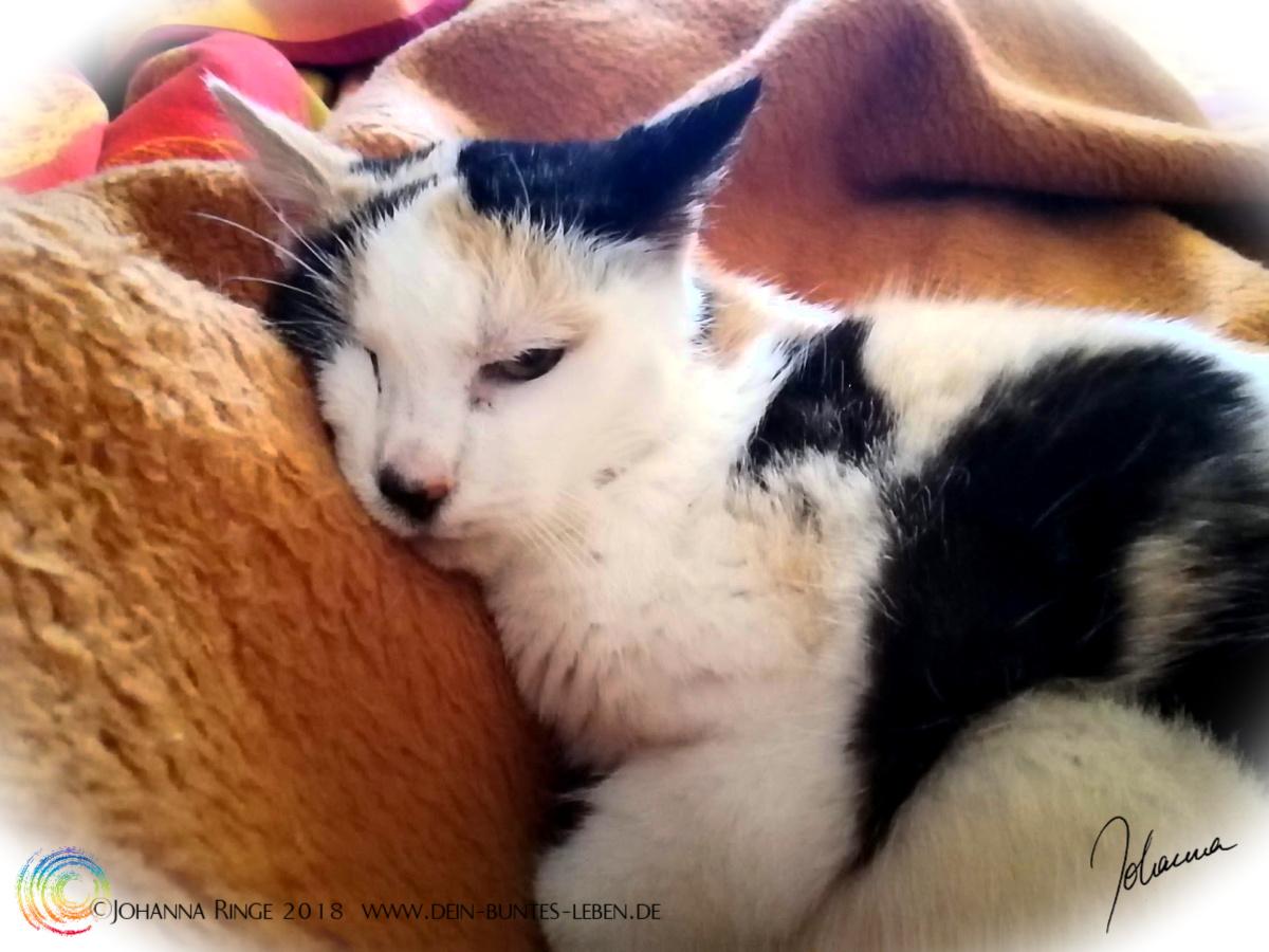 Skepsis: Katze, die ein Auge halb offen hat, während sie gemütlich in einer Decke liegt. ©2018 Johanna Ringe www.dein-buntes-leben.de