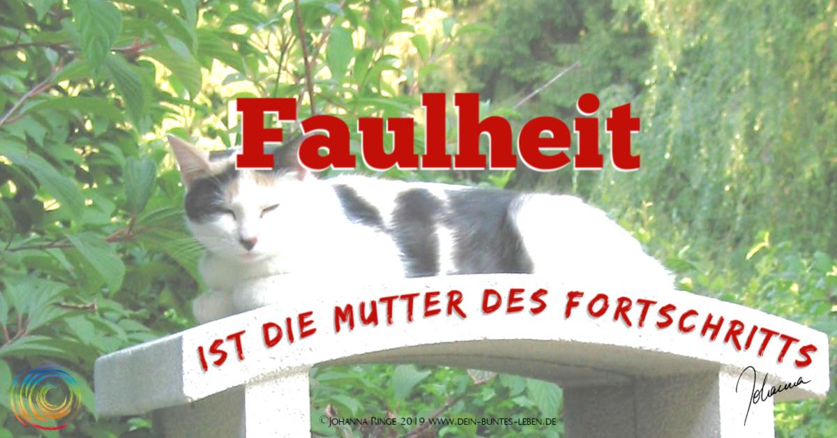 Faulheit ist die Mutter des Fortschritts. Foto von dösender Katze. ©Johanna Ringe 2019 www.dein-buntes-leben.de