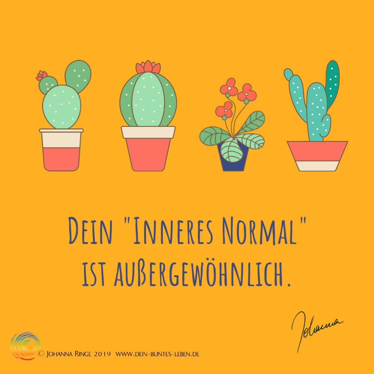 Dein Inneres Normal ist außergewöhnlich. 3 Kakteen und ein blühendes Alpenveilchen dazwischen. ©Johanna Ringe 2019 www.dein-buntes-leben.de