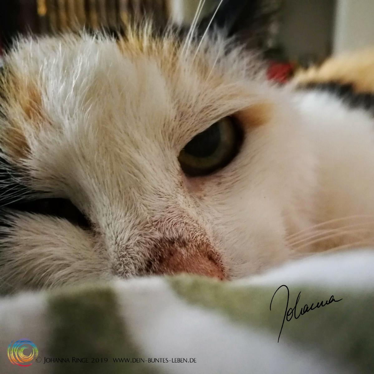 Meine Katze fehlt mir. Nahaufnahme von Leilas Gesicht. ©Johanna Ringe 2019 www.dein-buntes-leben.de
