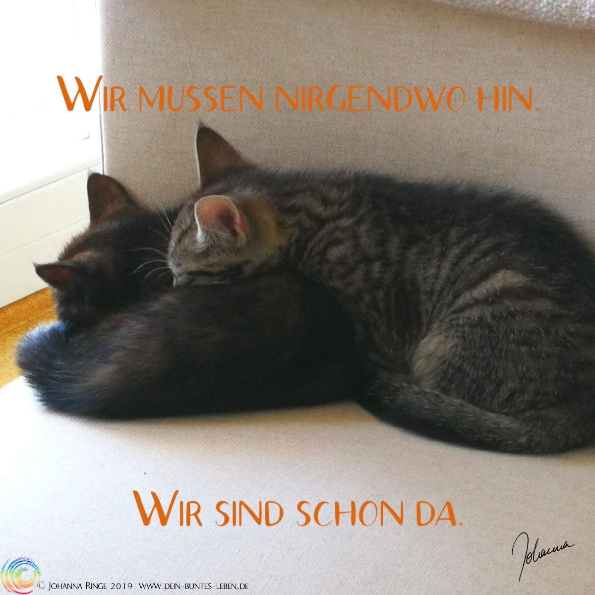 """Präsenz lernen von und mit Katzen: """"Wir müssen nirgendwohin, wir sind schon da."""" auf einem Photo zweier schlafender Kätzchen. ©Johanna Ringe 2019 www.dein-buntes-leben.de"""