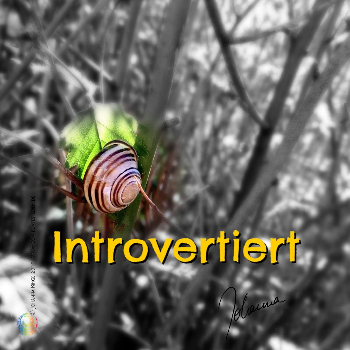 introvertiert: ein Schnecklein im Geäst. ©Johanna Ringe 2019 www.dein-buntes-leben.de
