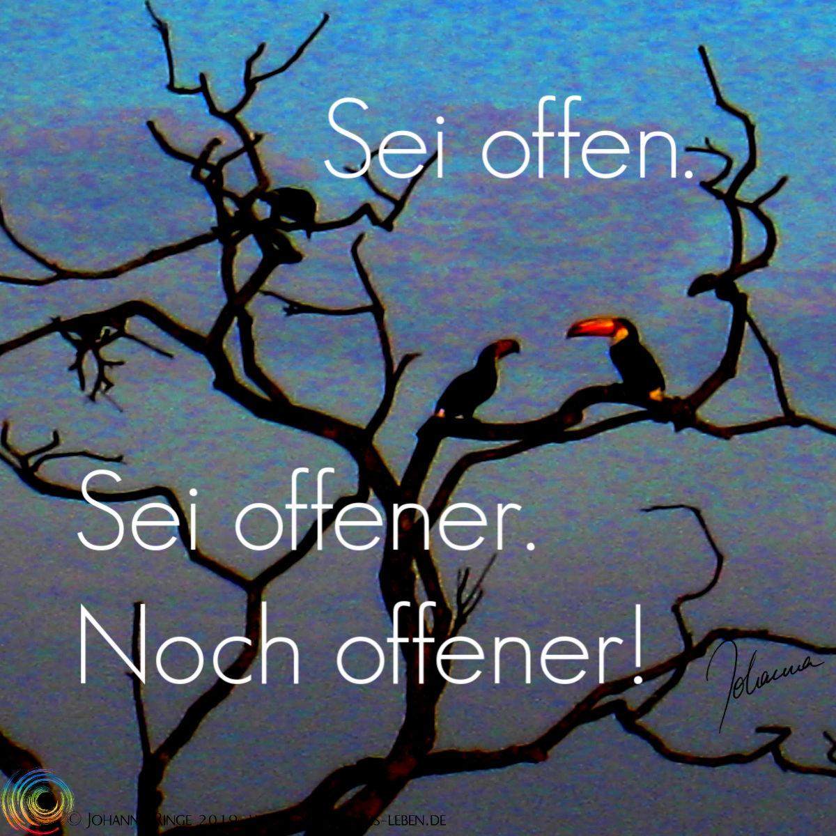 Sei offen. Sei offener. Text auf Foto von Tukanen in Baum. ©Johanna Ringe 2019 www.dein-buntes-leben.de