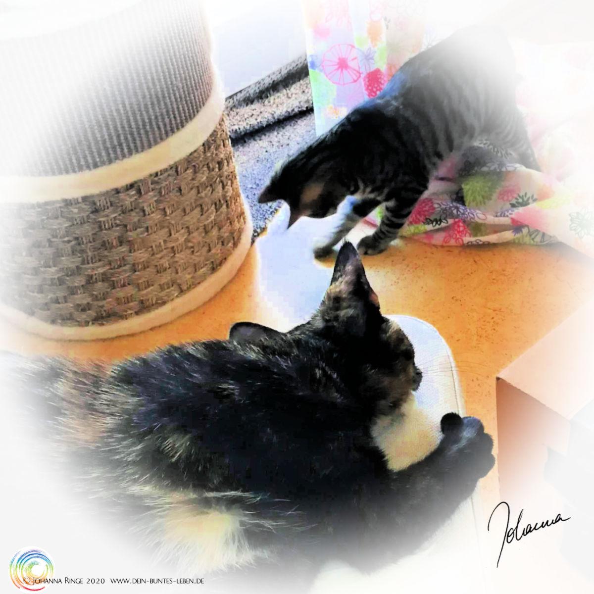 Konzentrationsmangel verstärkt durch tobende Katzen (Foto) ©Johanna Ringe 2020 www.dein-buntes-leben.de