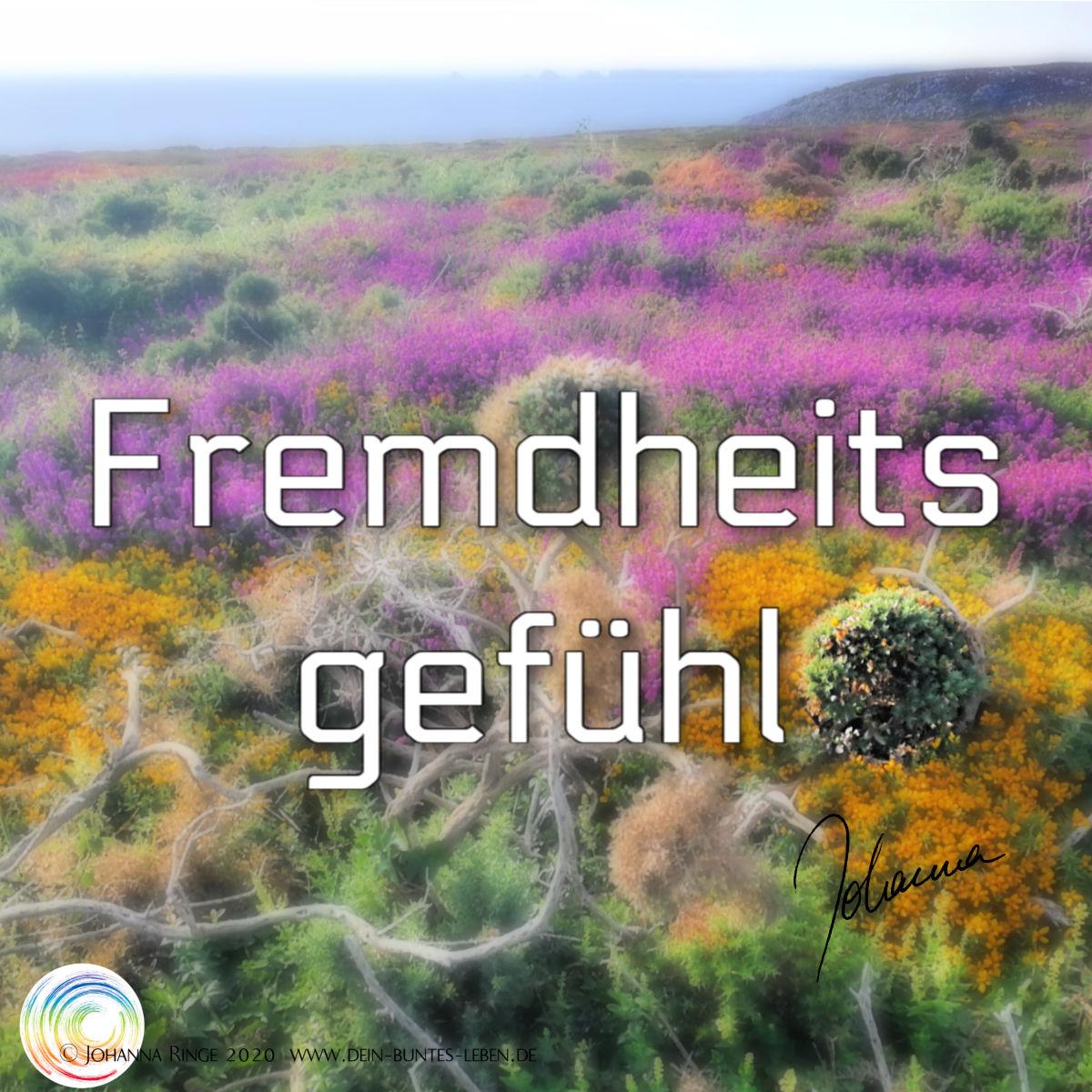 Fremdheitsgefühl: eine Heide mit merkwürdig unpassender Pflanze im Vordergrund. ©2020 Johanna Ringe www.dein-buntes-leben.de