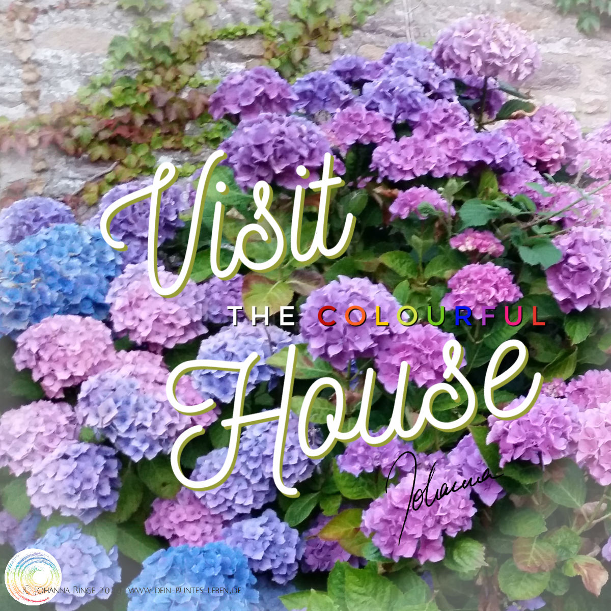 Visit the colourful house (text over hydrangeas) ©Johanna Ringe 2020 www.johannaringe.com