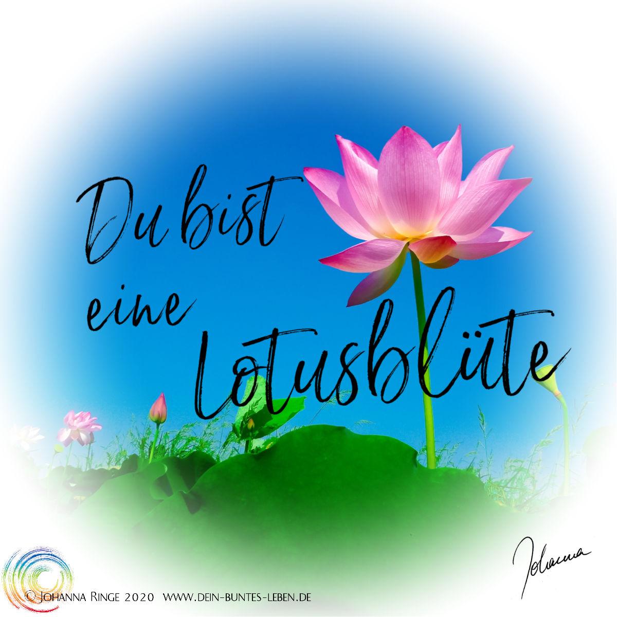 Du bist eine Lotusblüte: Taxt über Photo von blühendem Lotus in der Sonne. ©Johanna Ringe www.johannaringe.com