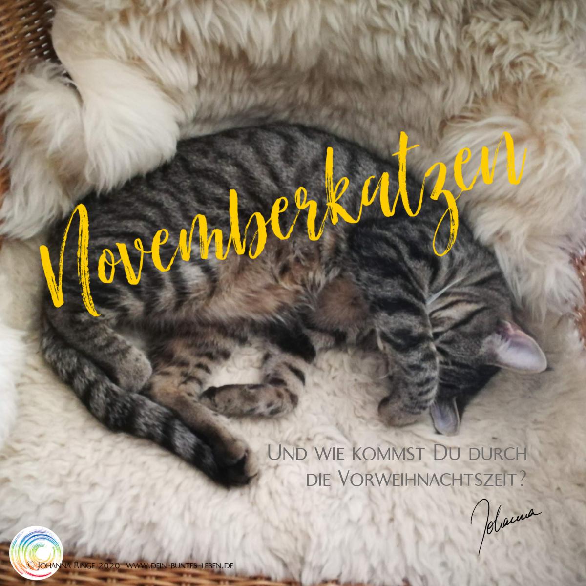Novemberkatzen: eine getigerte Katze liegt schlafend auf einem Stuhl und hat eine Pfote über den Augen. ©2020 Johanna Ringe www.dein-buntes-leben.de